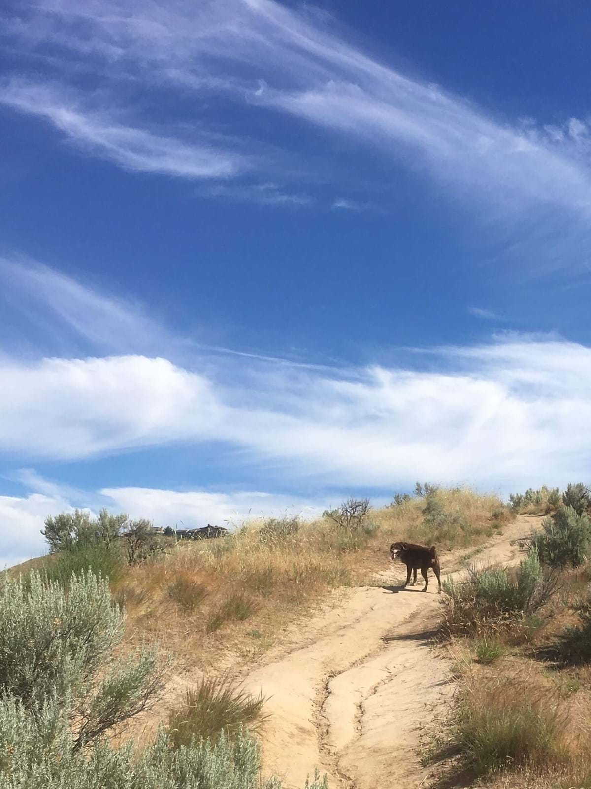 Dog on a dirt trail situated up hill with bright blue sky and grass along the side