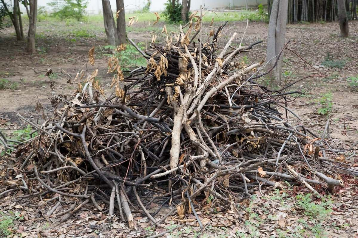 pile of tree branches