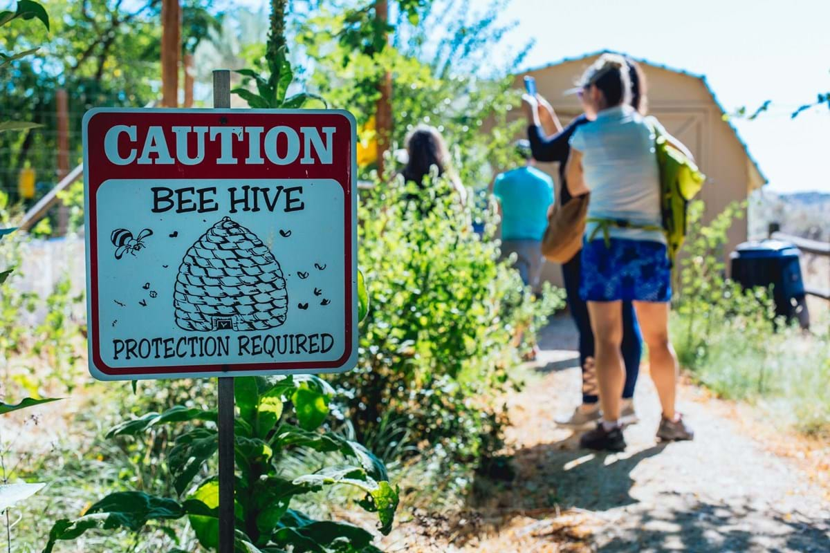 Caution Bee Hive sign